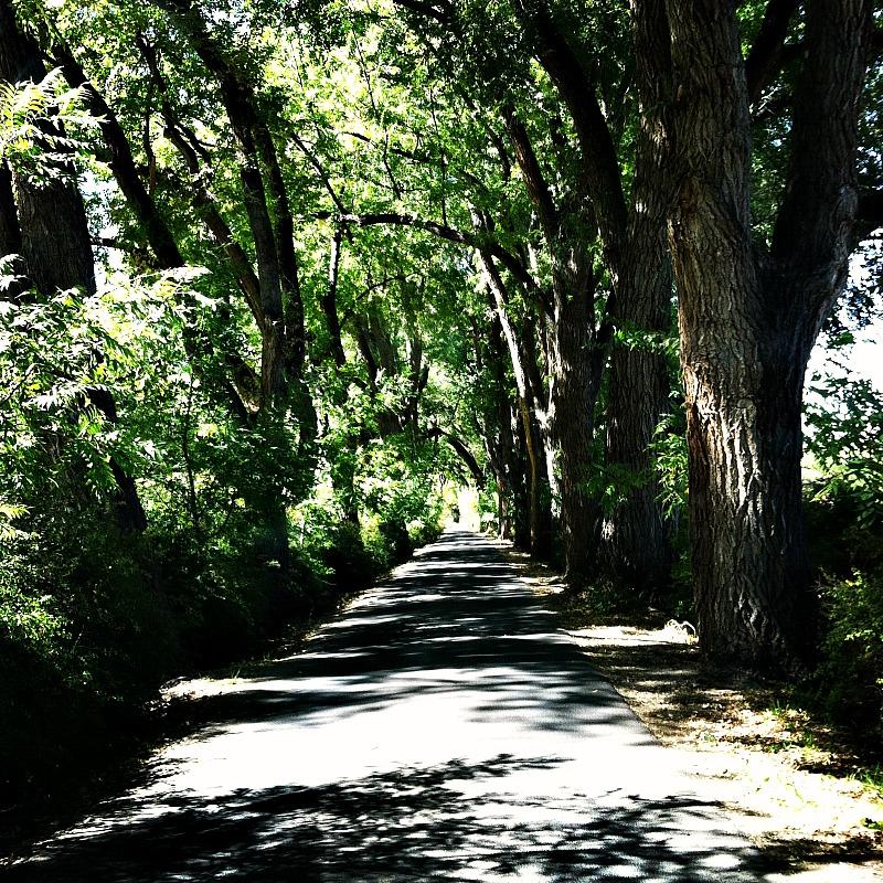 Los Poblanos tree lined entrance