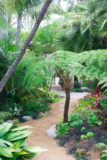 Sherman library & Gardens Palms