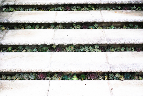Sherman Library & Gardens Succulents in Stair (