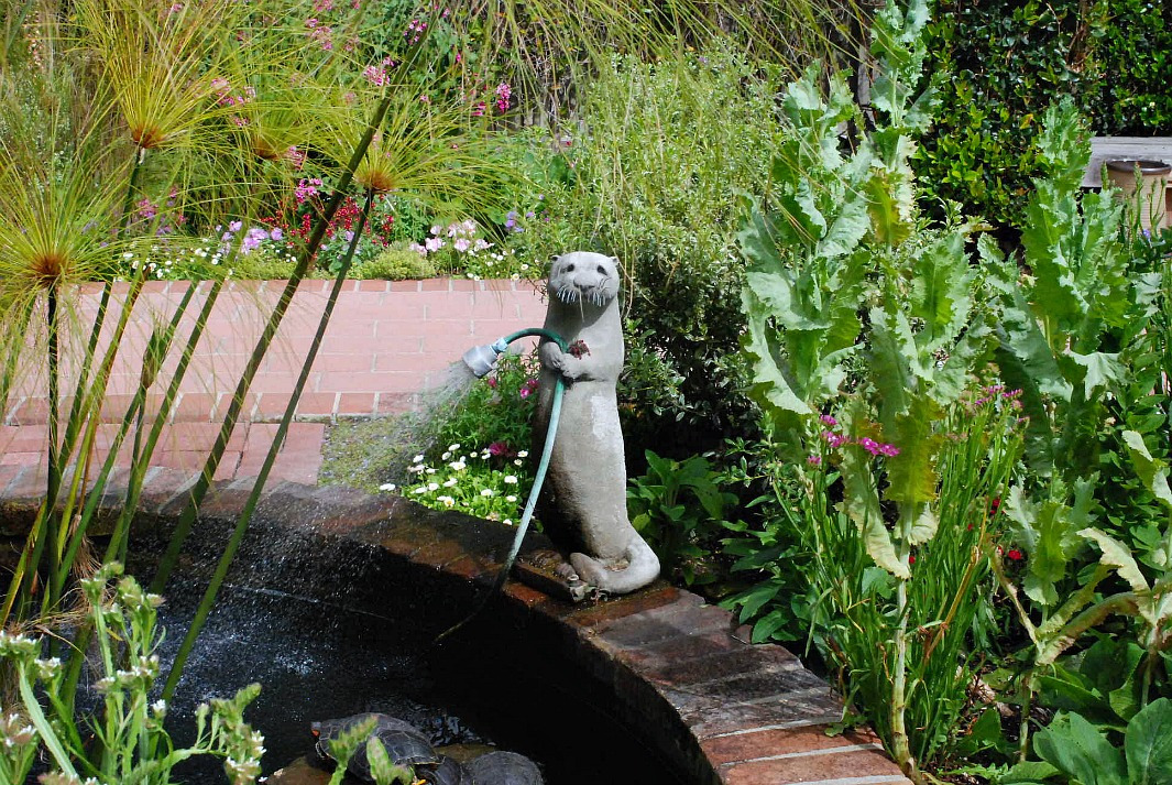 Sherman Library & Gardens watering Otter