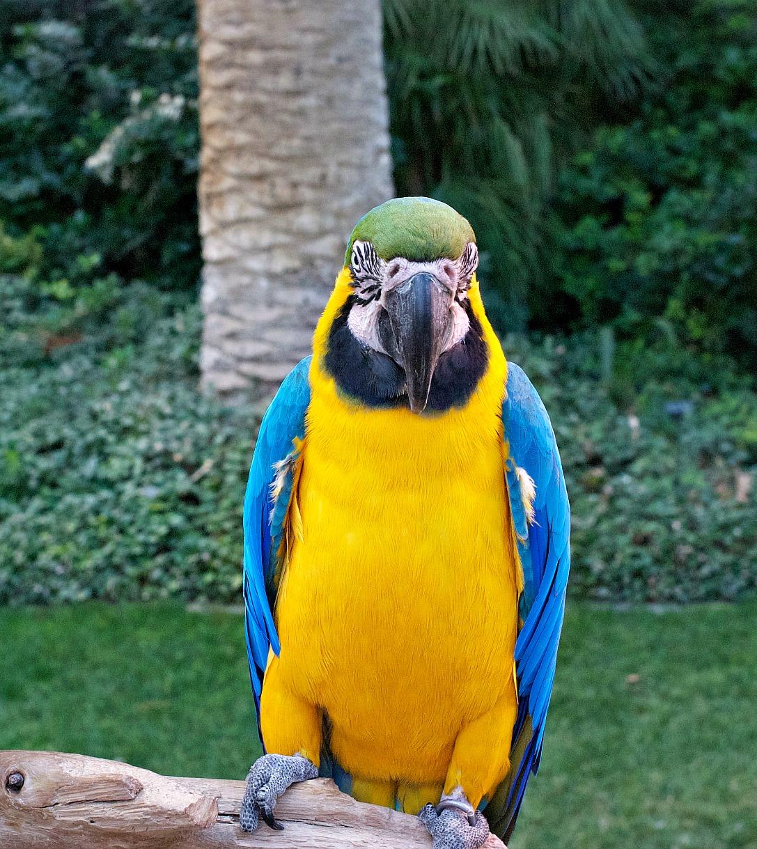 Las Vegas Flamingo Hotel Parrots