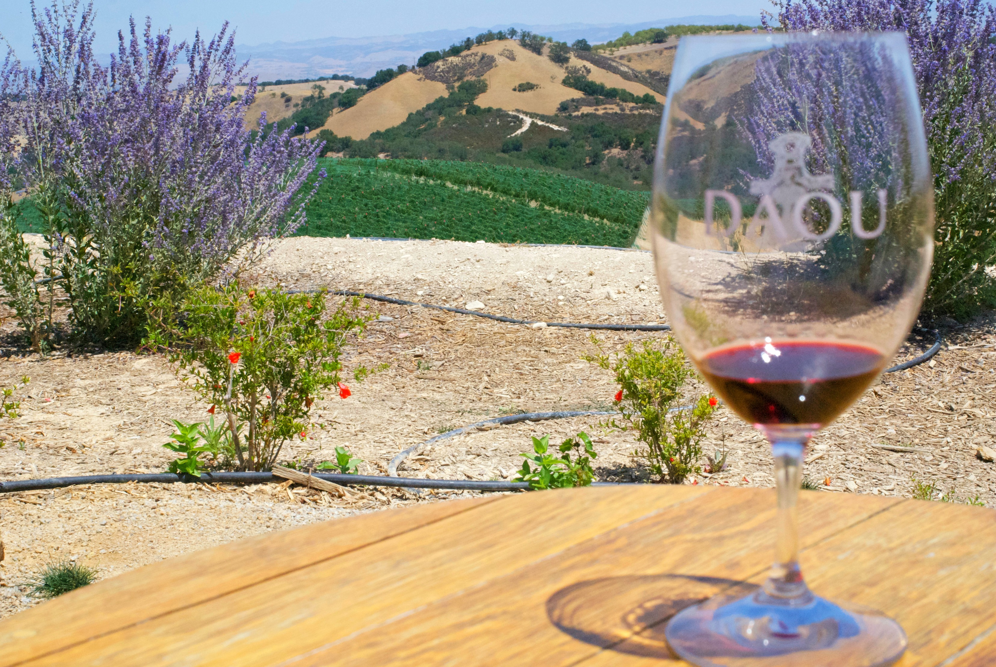 Daou Winery spectacular view