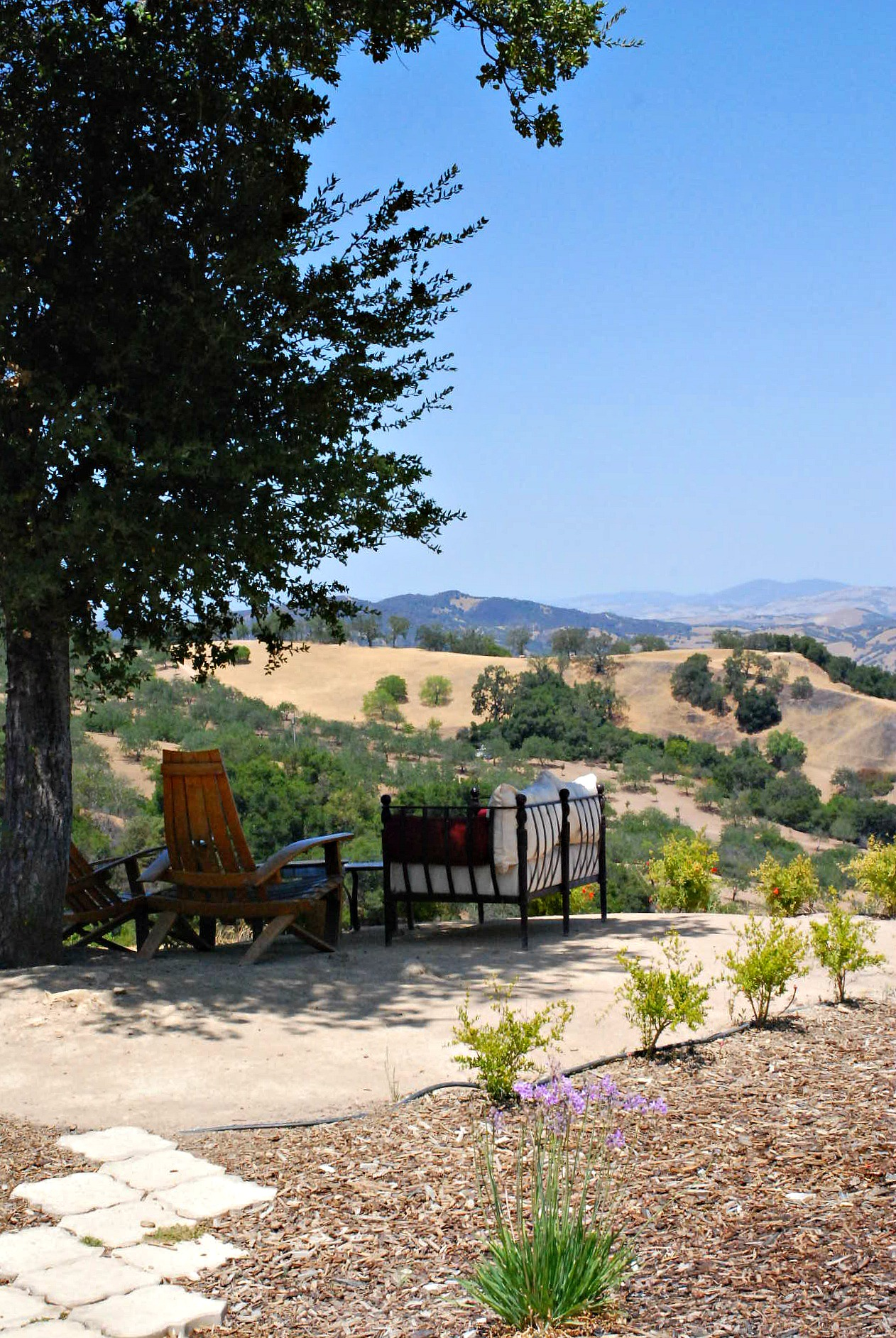 Daou Winery favorite place