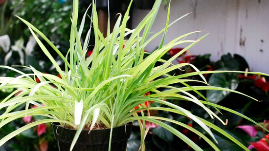Houseplants for a Healthier Home
