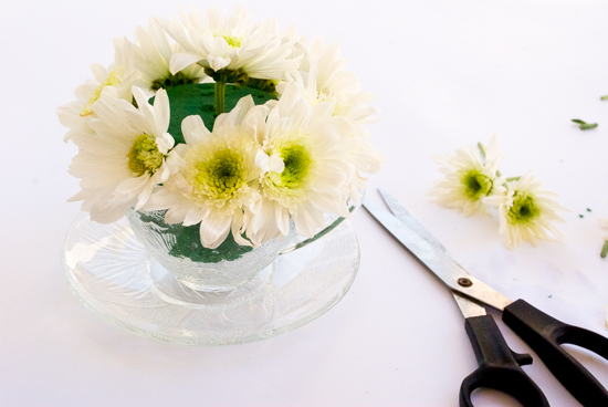 daisies in a teacup, putting in the tea cup