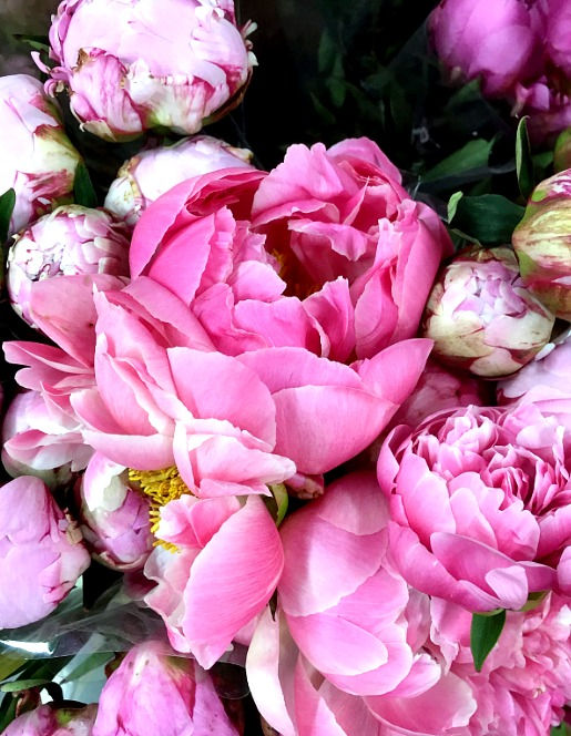 Friday Five Peonies